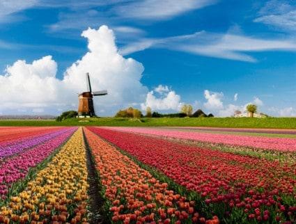olanda_tulipani