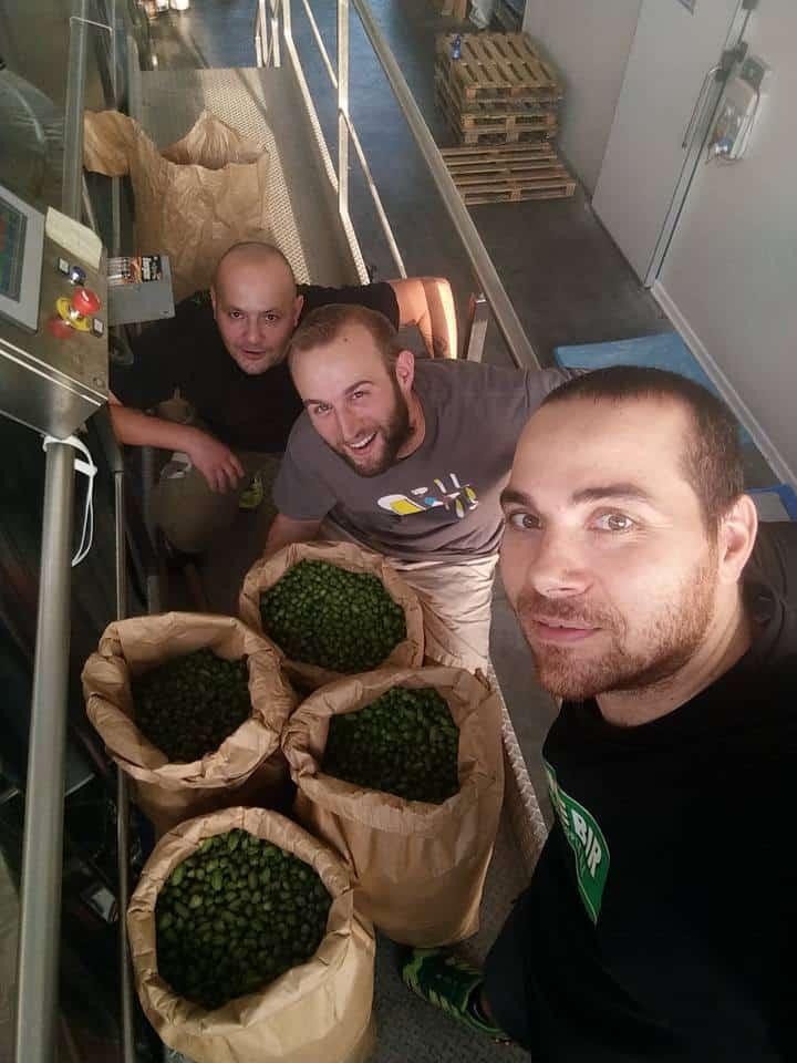 harvest mastino