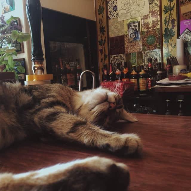 cat-pub-