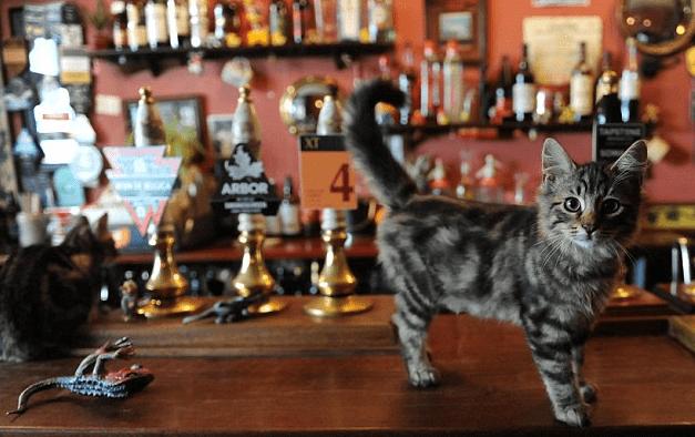 gatto birreria